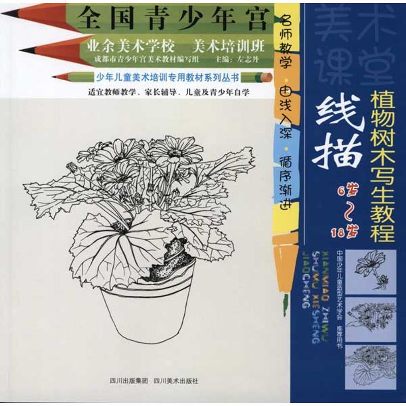 线描植物树木写生教程