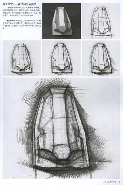 基础美术起步训练大范本·临摹/结构素石膏五官及半