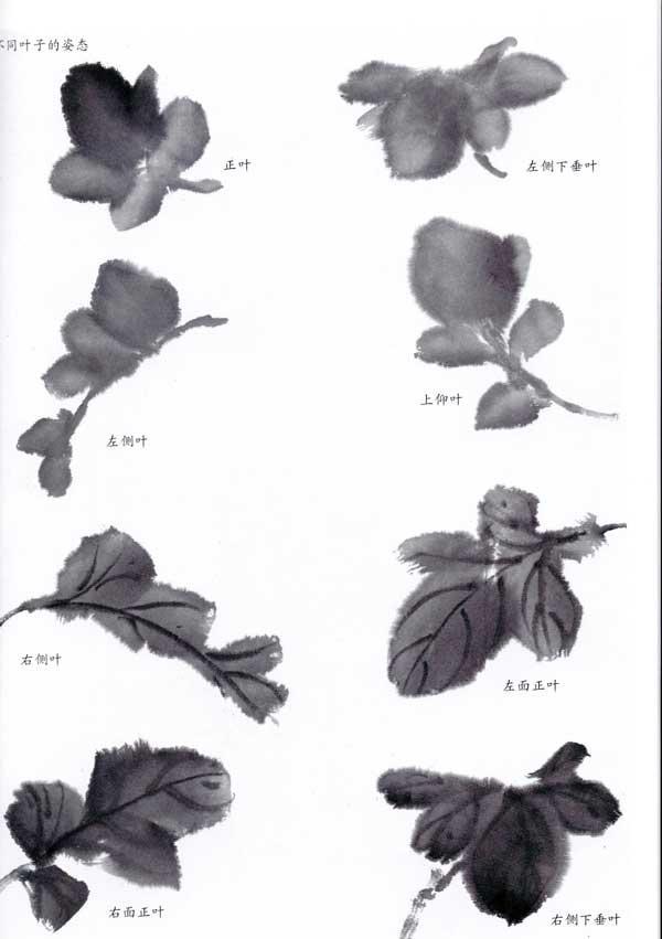 国画入门_国画入门训练新编/菊花(写意花鸟