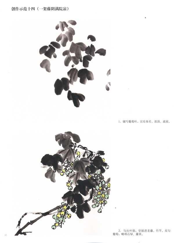 葡萄球菌图片手绘