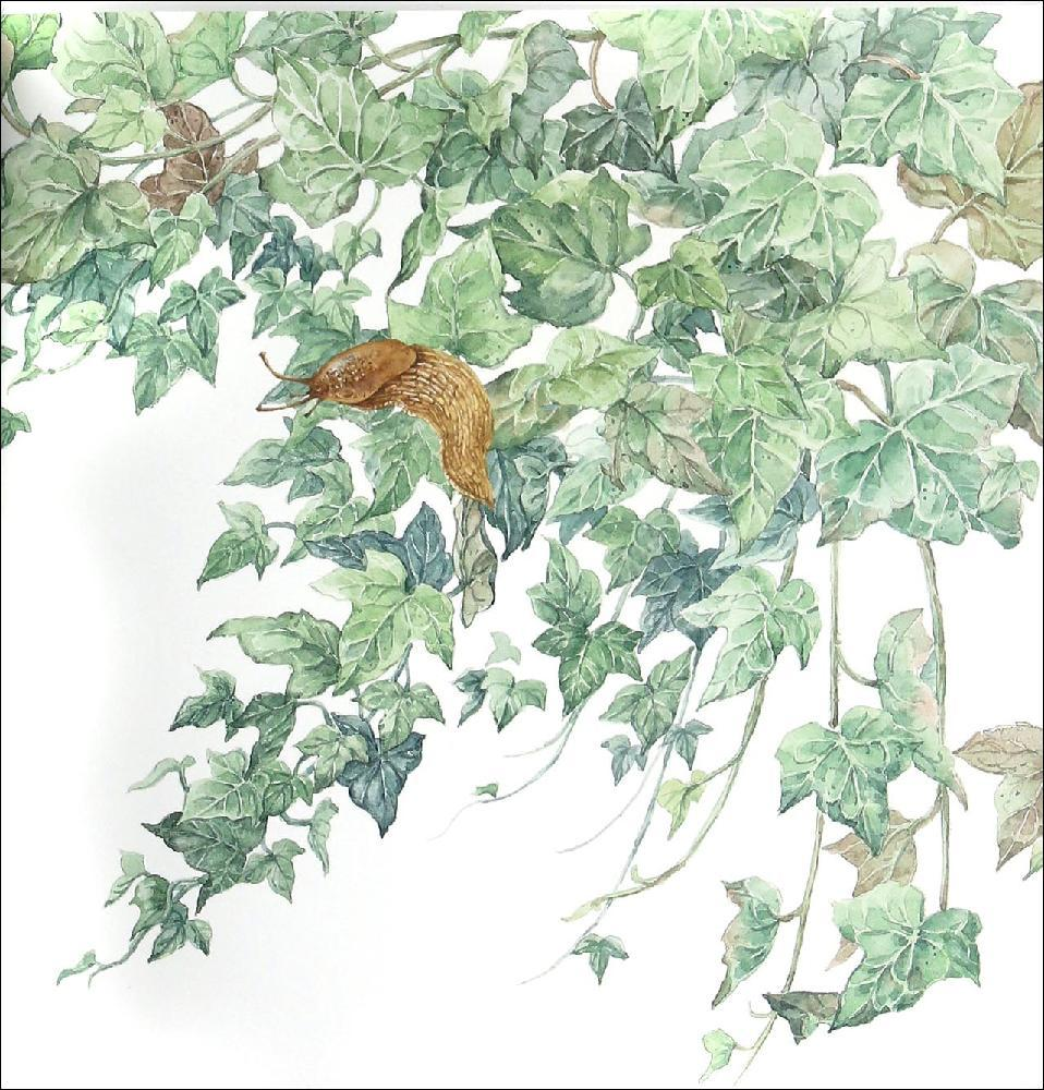 用水彩的表现方式描绘大自然,在欧洲多次出版了以自然为主题的贺卡.