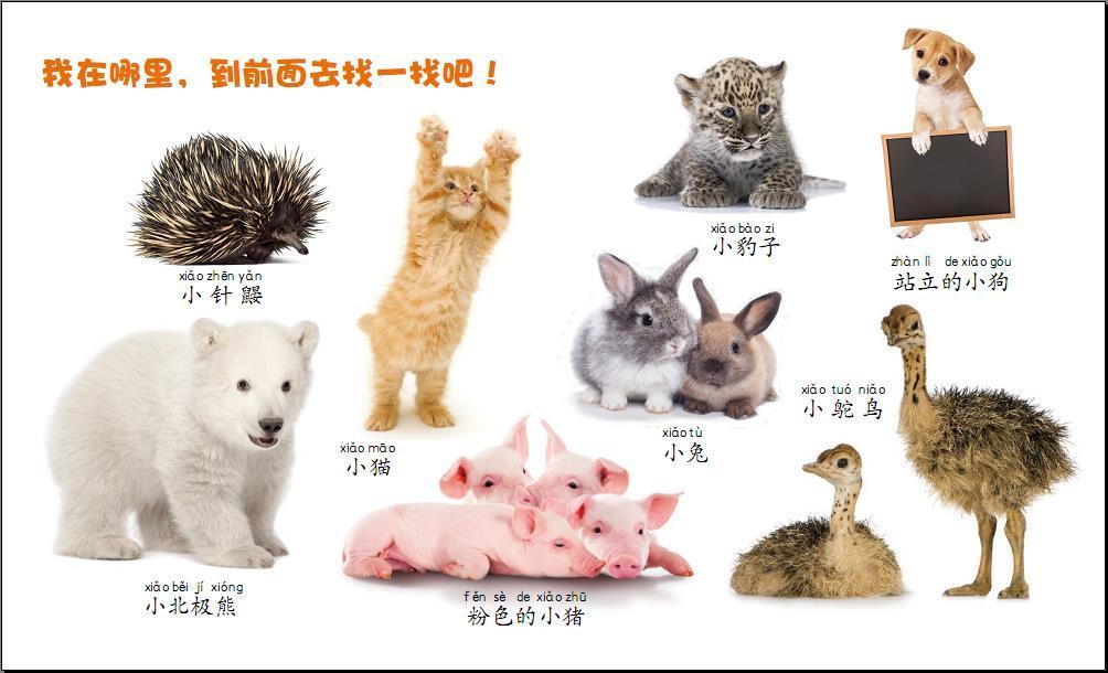 我的认知书(动物宝宝)-英国兄弟儿童出版公司 编