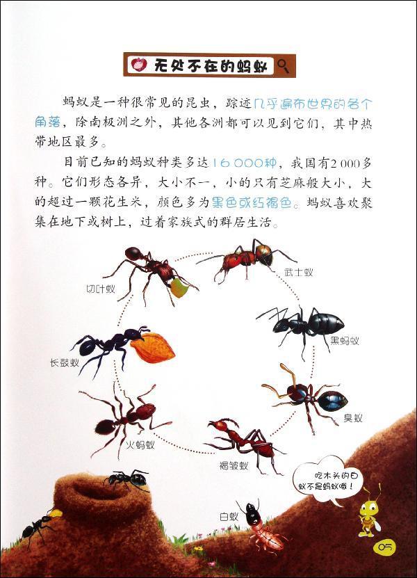 蝗虫和蚂蚁身体结构图