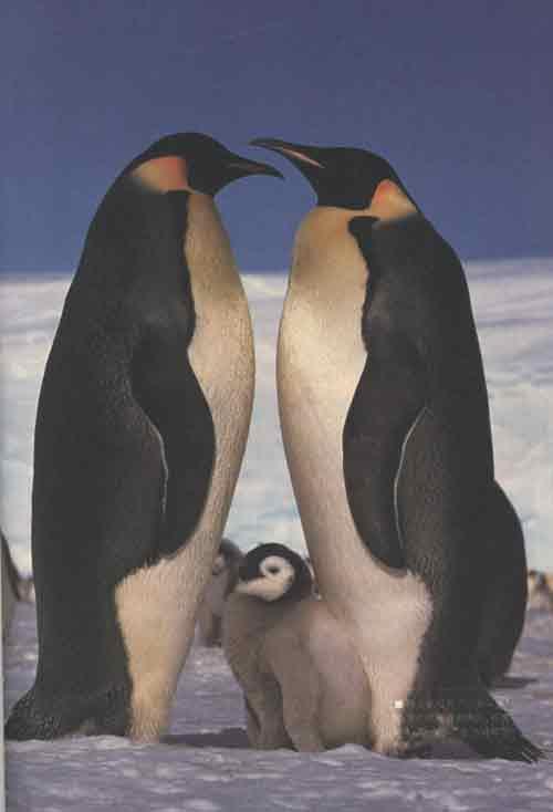 qq黑白企鹅头像骷髅.