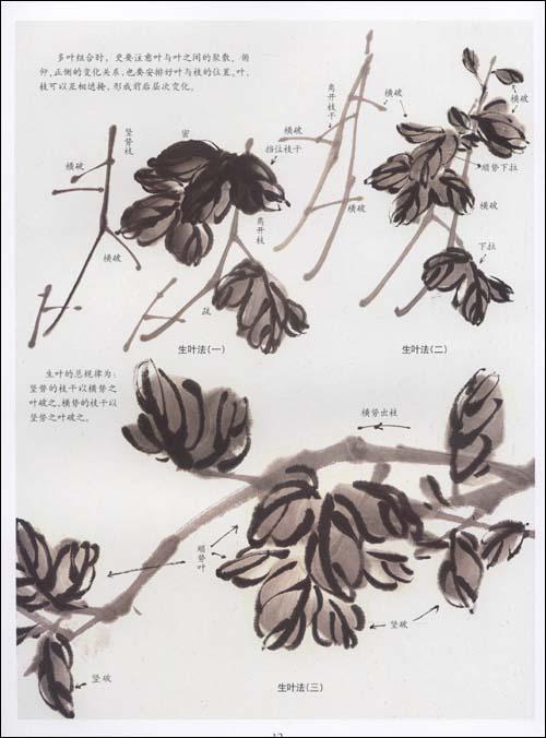 菊花的画法 [刘彦明]-书籍/图书/杂志-保健/健身