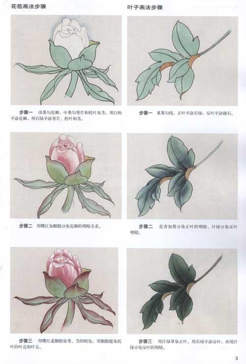 牡丹工笔画法-张旭-技法教程-文轩网