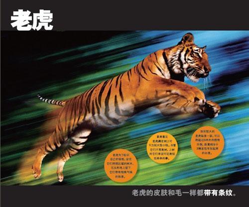 野生动物跳出来-美国国家地理学会;赵洁-科普/百科