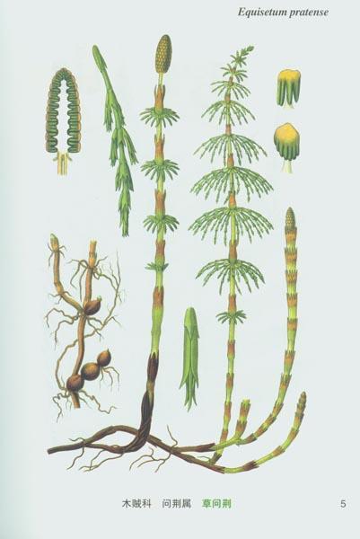 植物画画步骤图片大全
