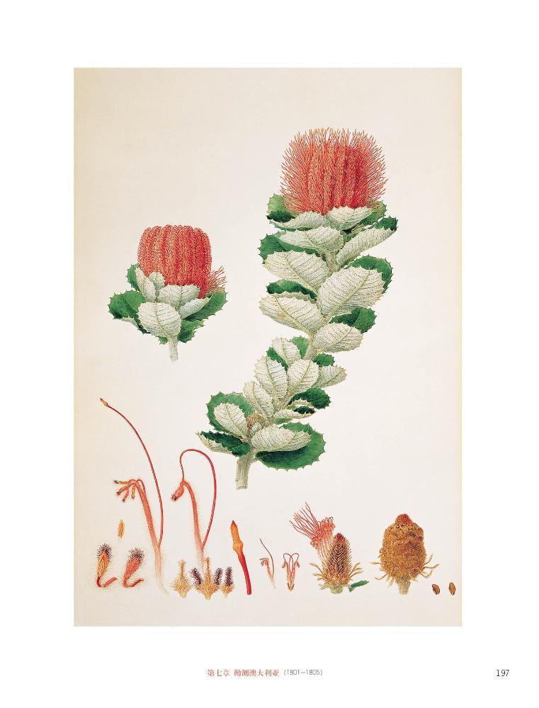 水彩画花卉步骤约瑟夫水彩画