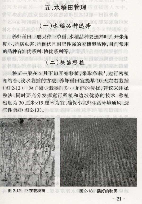 本书用图片反映了稻田养殖小龙虾的关键技术环节