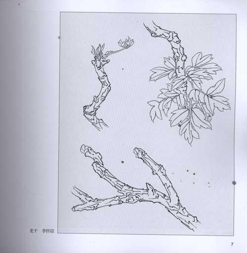 黑白桃花手绘图