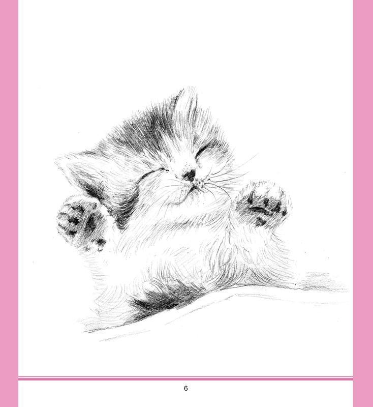 一日一画·素描.可爱动物-王森海-绘画-文轩网