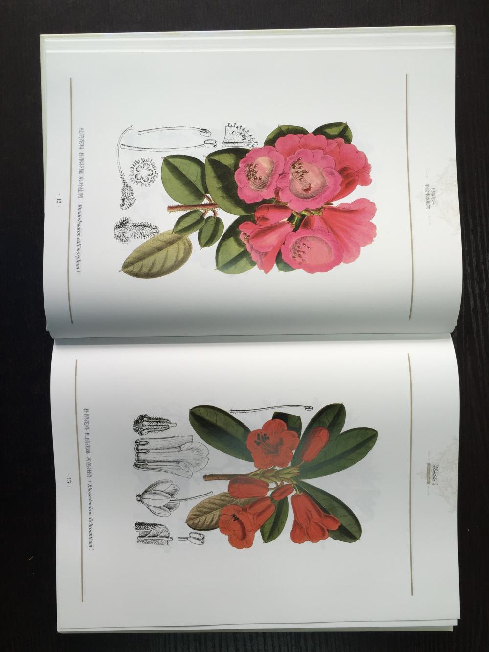 合欢花唯美手绘插画