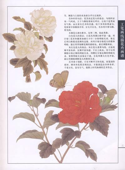 工笔画线描花卉画谱.木槿篇 书籍 商城 美术 正版