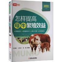 怎样提高母牛繁殖效益